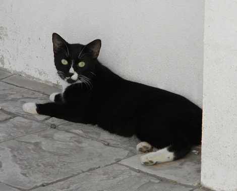 Fred, the caper cat, Aruba