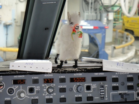 Llama on the console of 737.