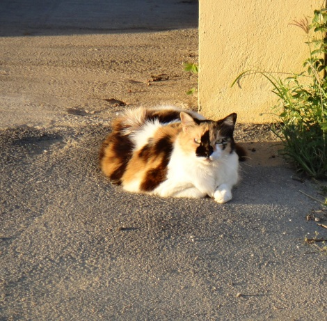 Titan the Cat, relaxes at sunset.