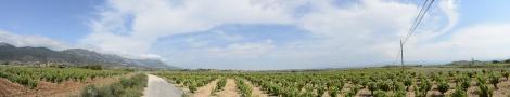 Panorama of the vineyards in La Rioja, Spain.